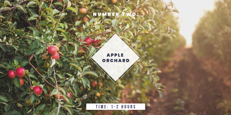 Things to do in Colorado in the Fall: Go to an Apple Orchard