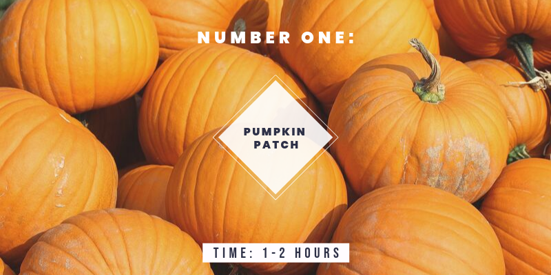 Things to do in Colorado in the Fall: Visit a Pumpkin Patch